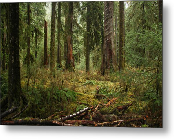 The Hoh Rainforest Metal Print