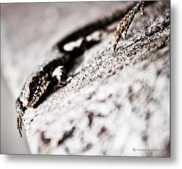 The Iron Lizard Metal Print