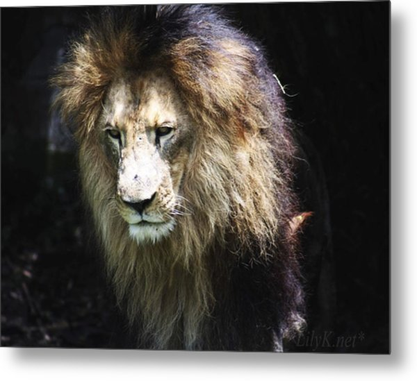 The King In The Shadows Metal Print