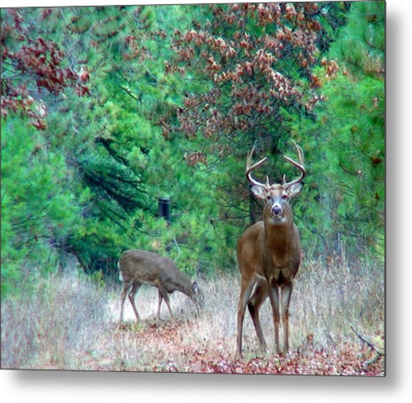 The King Metal Print