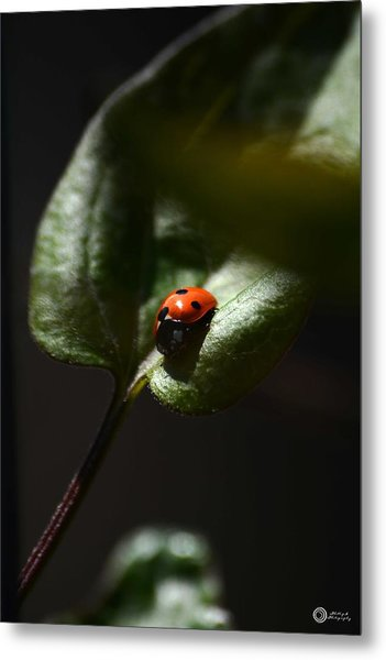 The Lady Bug Metal Print by Phillip Segura