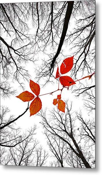The Last Leaves Of November Metal Print