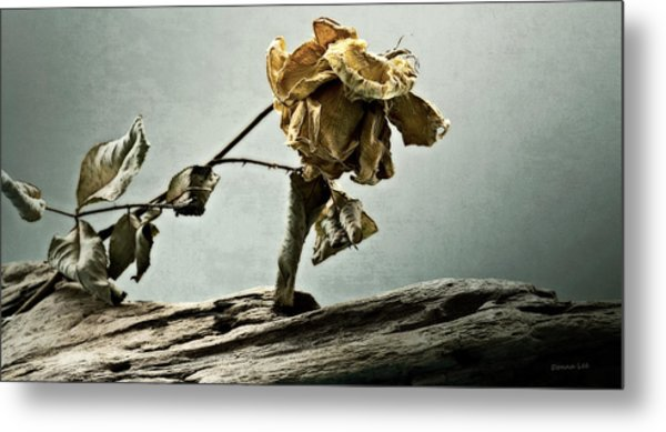 The Last Yellow Rose Of Summer Metal Print