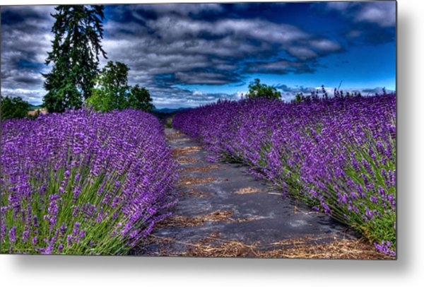 The Lavender Field Metal Print