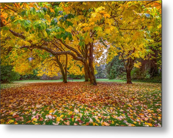 The Leaves Of Autumn Metal Print