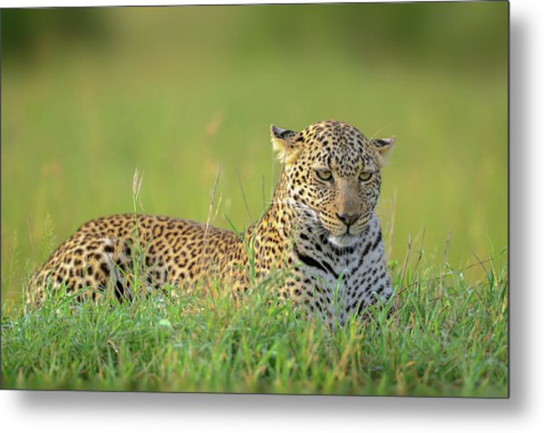 The Leopard Metal Print by Roshkumar