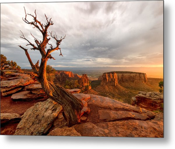 The Light On The Crooked Old Tree Metal Print