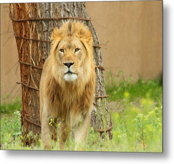 The Lion Metal Print by Gene Praag