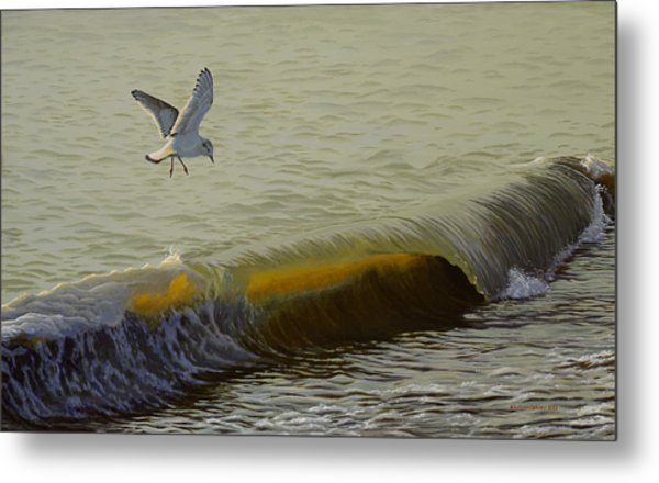 The Little Gull Metal Print