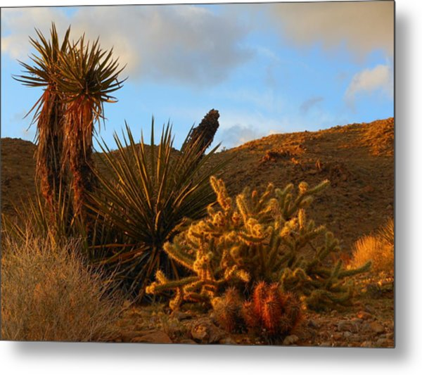 The Living Desert In Winter Metal Print