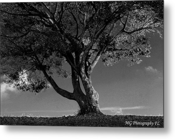 The Lone Tree Black And White Metal Print