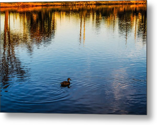 The Lonely Duck  Metal Print
