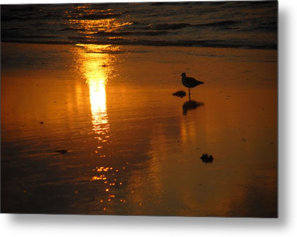 The Lonely Seagull Metal Print