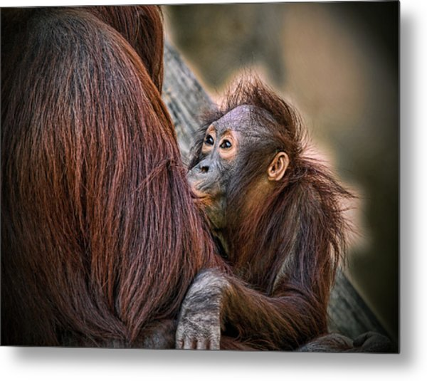 Metal Print featuring the photograph The Look Of Love by Donna Proctor