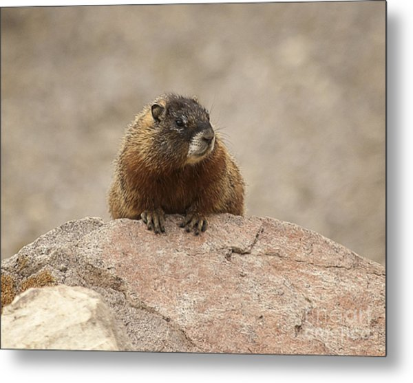 The Lookout Metal Print by Bob Dowling