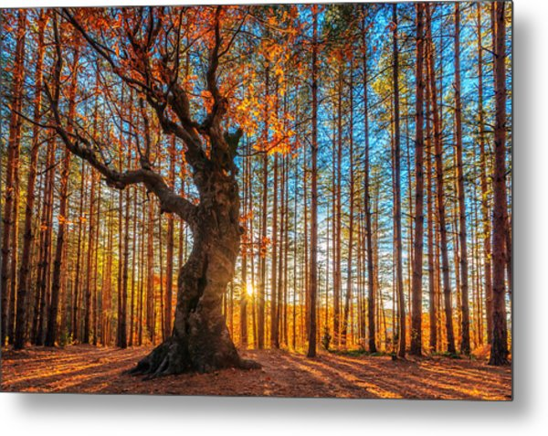 The Lord Of The Trees Metal Print
