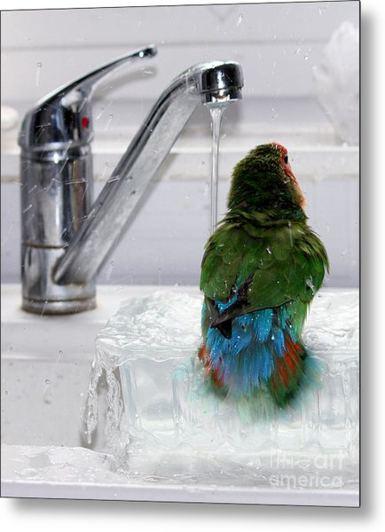 The Lovebird's Shower Metal Print