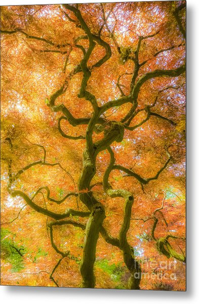 The Magic Forest-15 Metal Print
