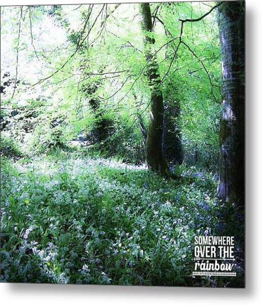 The Magical Forest Around Blarney Metal Print
