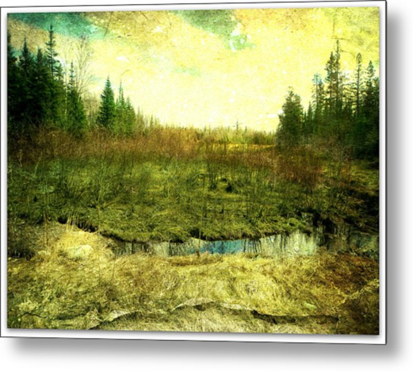 The Marshland  Metal Print by Dianne  Lacourciere