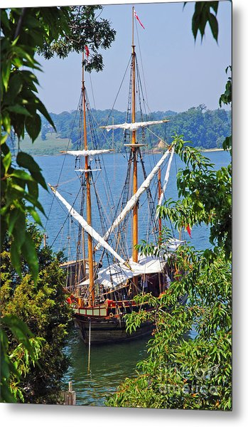 The Maryland Dove Metal Print