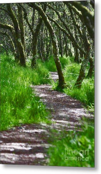 The Meandering Path Metal Print by Lynne Sutherland