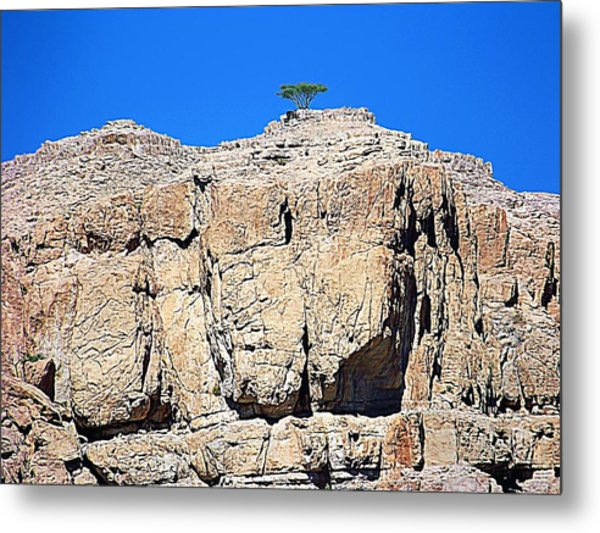 The Miracle Of Life Metal Print by Peter Waters