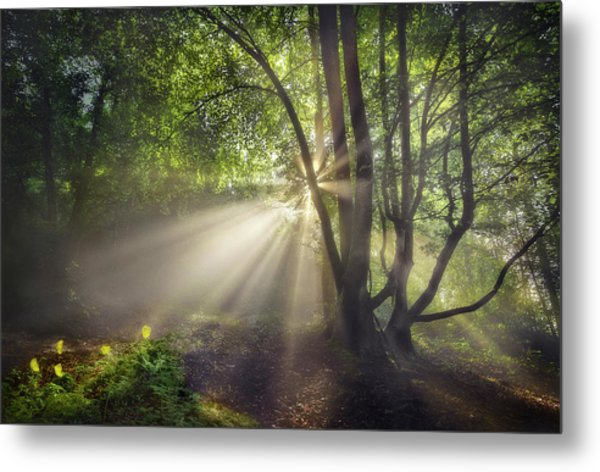 The Morning Light Metal Print by Fran Osuna