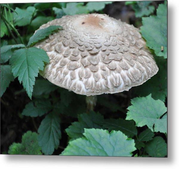 The Mushroom Metal Print