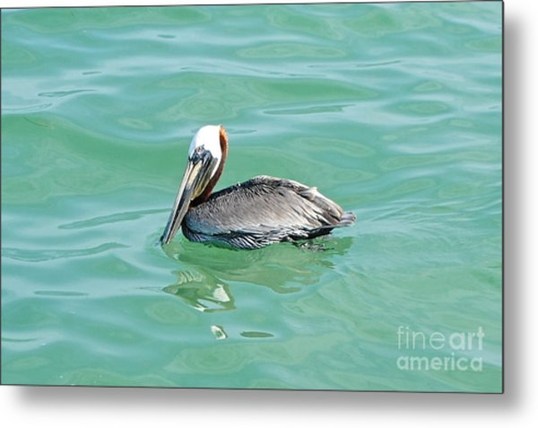 The Napping Pelican Metal Print