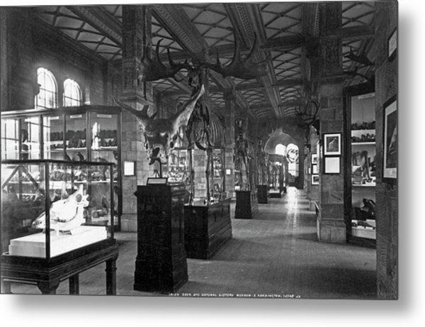 The Natural History Museum Metal Print