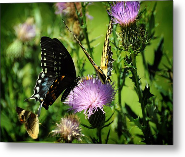 The Nectar Seekers Metal Print