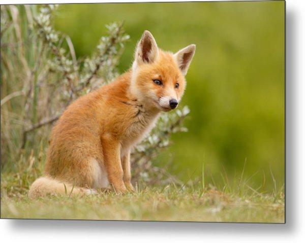 The New Kit ...curious Red Fox Cub Metal Print