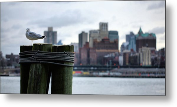 The New Yorker  Metal Print by JC Findley