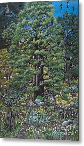 The Old Juniper Tree Metal Print