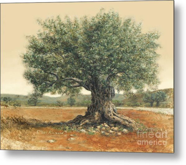 The  Old Olive Tree. By Miki Karni Metal Print