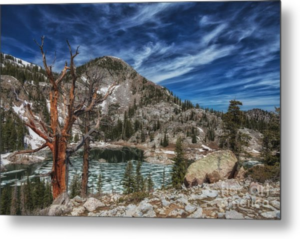 The Old Tree And Lake Mary Metal Print by Mitch Johanson