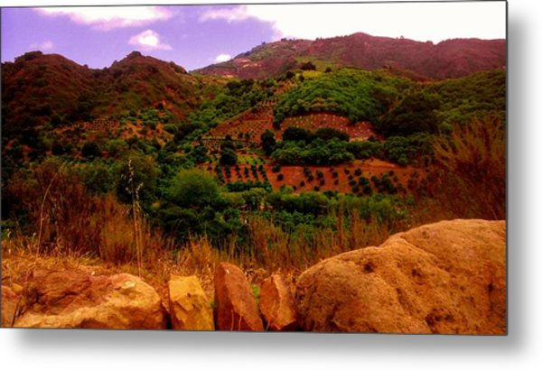 The Orchards Metal Print by Sharon Costa