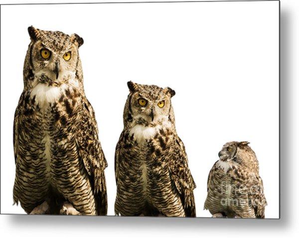 The Owl Trio Metal Print