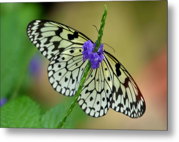 The Paper Kite Butterly Metal Print