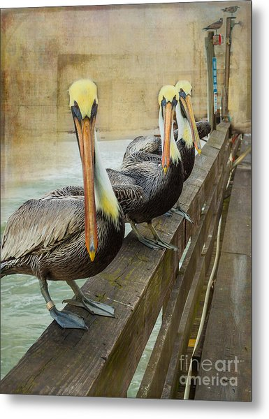 The Pelican Gang Metal Print