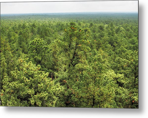 The Pinelands Metal Print by Dawn J Benko