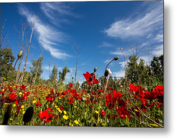 The Poppies Field Metal Print