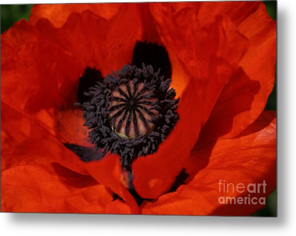 The Poppy Is Also A Flower Metal Print
