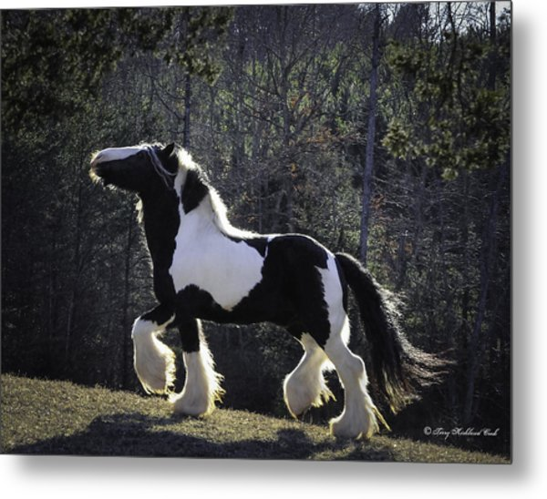 The Prancing Stallion Metal Print