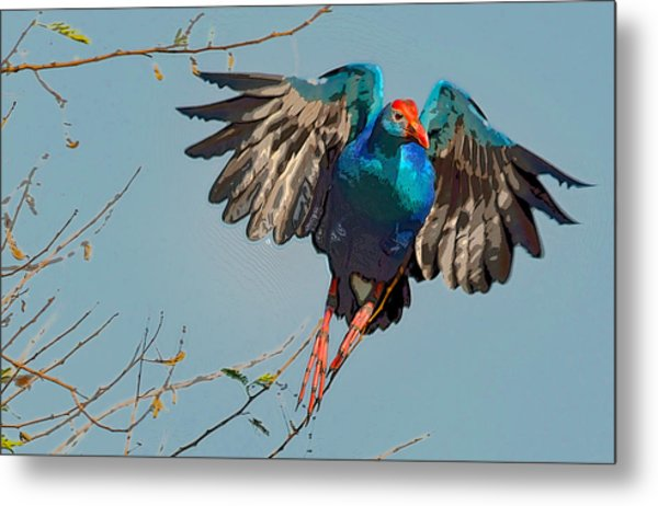 The Purple Swamphen Metal Print