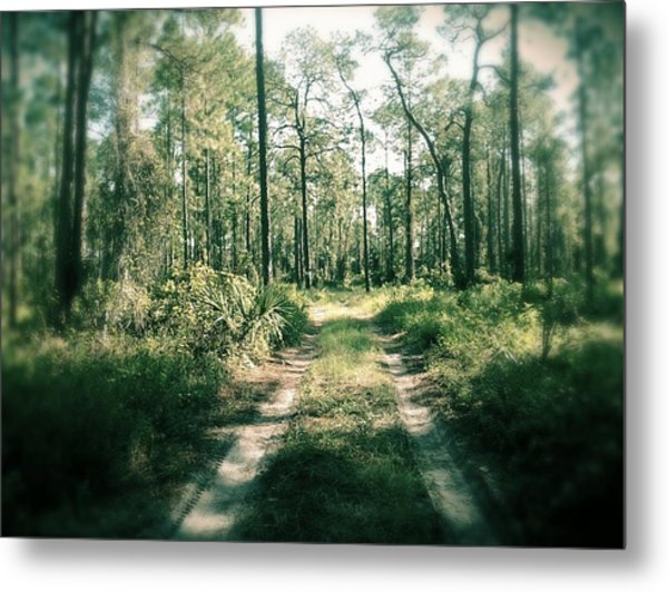 The Quiet Walk Metal Print by Chasity Johnson