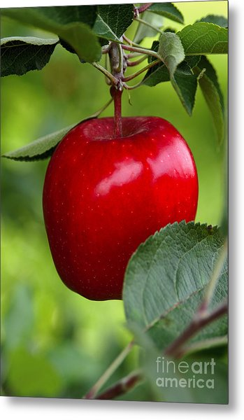 The Red Apple Metal Print