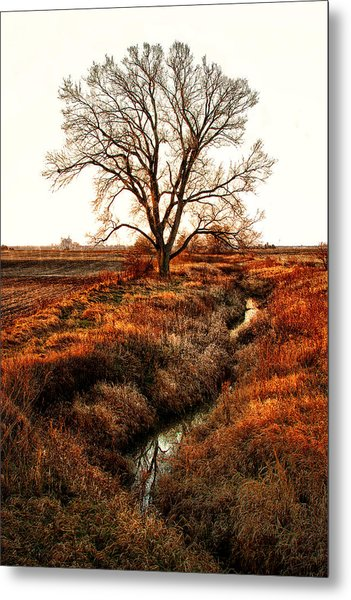The Red Morning Tree Metal Print