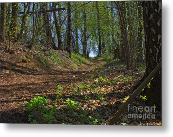 The Road In Spring Forest Metal Print by